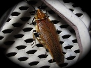 20th May 2011 - Unknown bug
