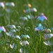 A field of bubbles by egad