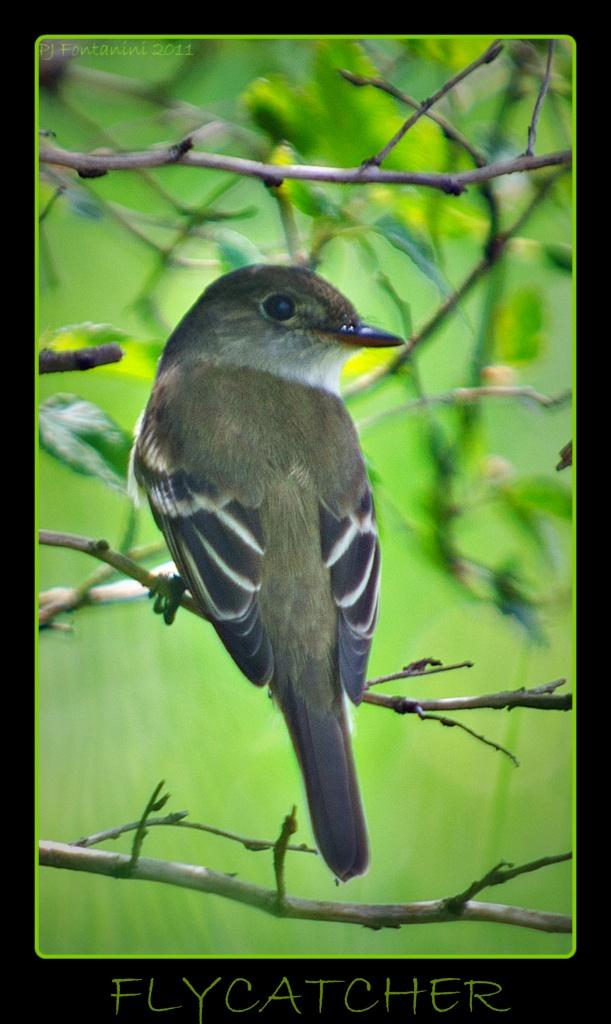 Mystery Bird by bluemoon