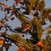 Autumn evening light by alia_801