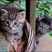 Potted Cats,The Next Generation by cjwhite