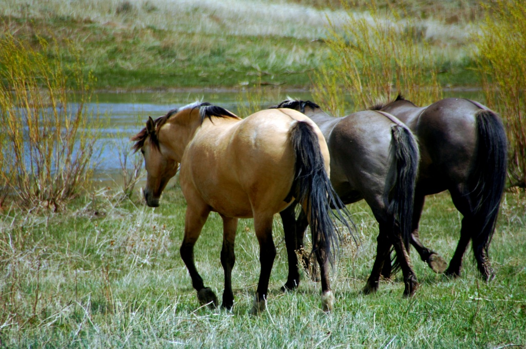wild horse sanctuary by pfmandeville