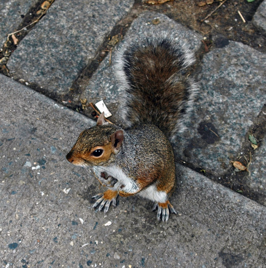 Just for fun: My New Yorker's friend by parisouailleurs