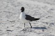 15th May 2011 - Beach bird (filler)
