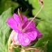 Stilt Bugs by sunnygreenwood