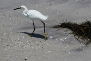 23rd May 2011 - Beach bird