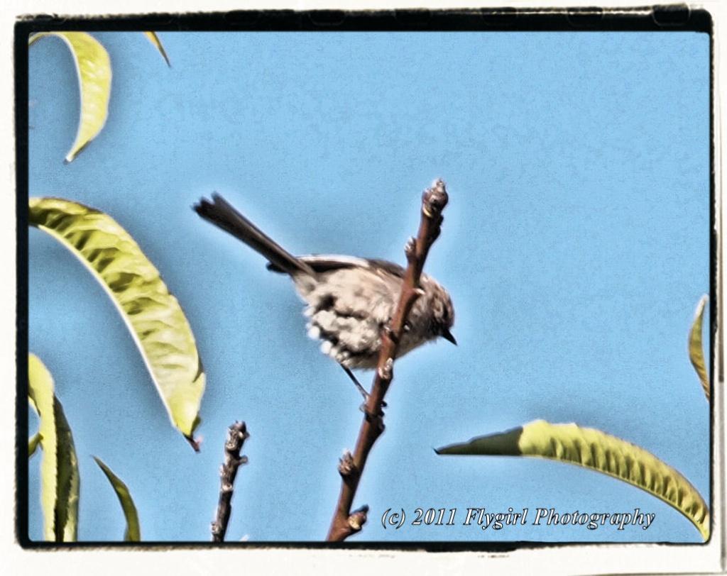 Morning Bird by flygirl