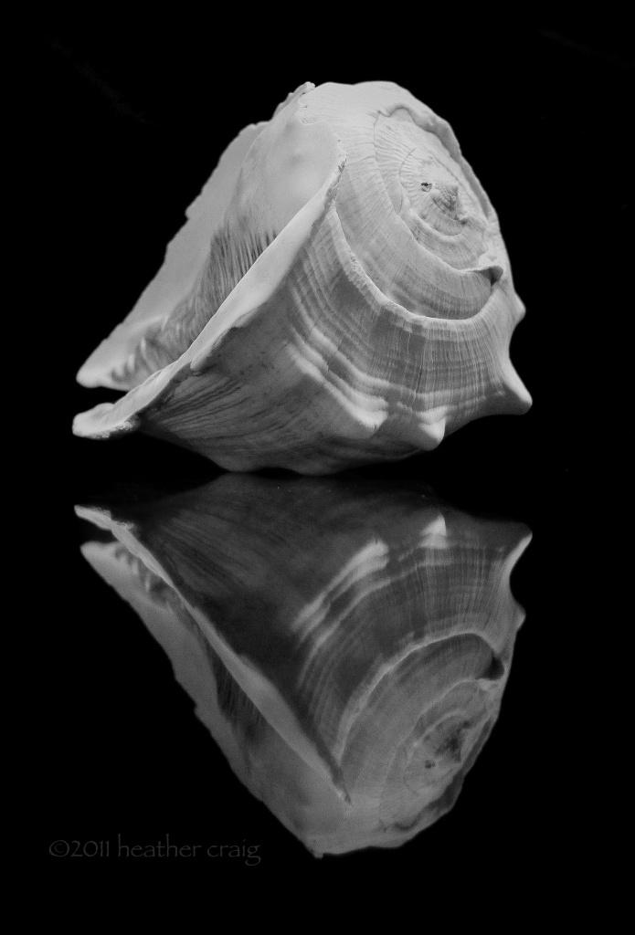 Untitled Shell by pixelchix
