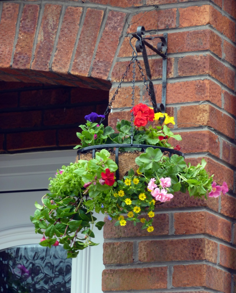 One of my Hanging Baskets by phil_howcroft