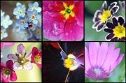 5th May 2011 - springtime