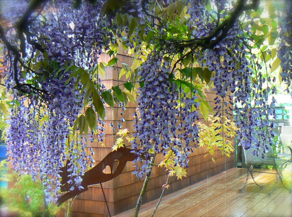 through the curtain of wisteria by reba