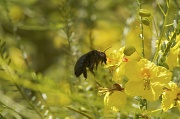 23rd May 2011 - Bee Time