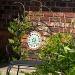 The Vine by eudora