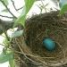 Tiny Robin by kdrinkie
