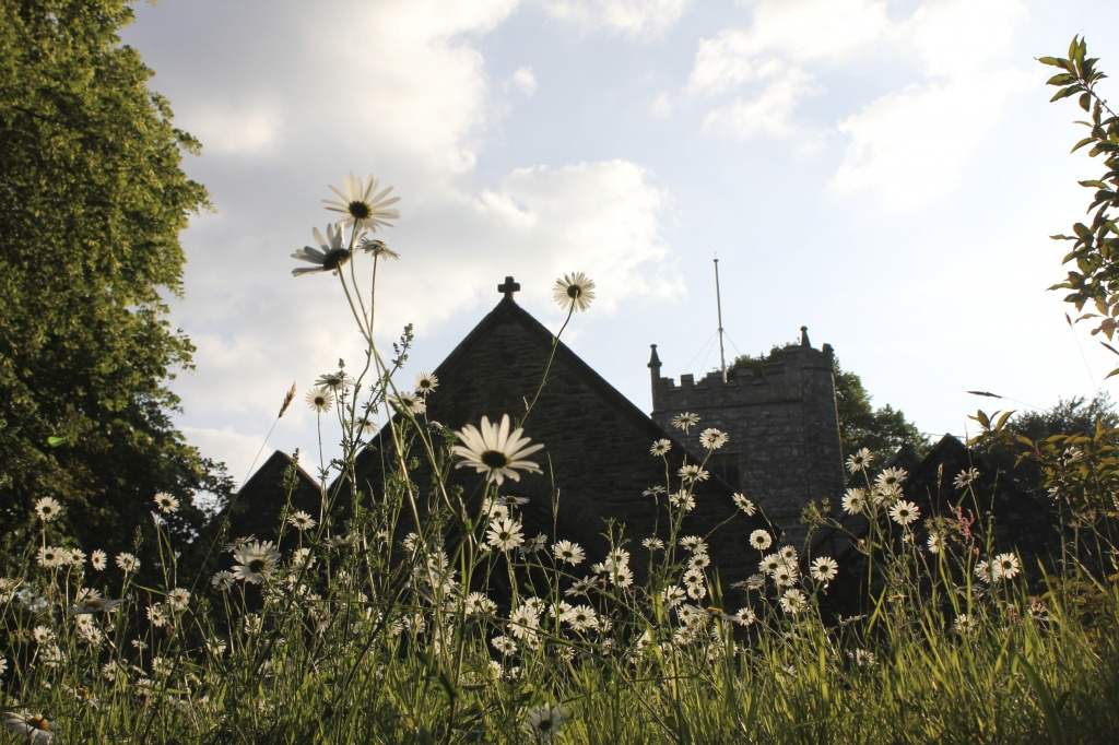 St Daisies. by daffodill