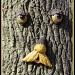 Woodman? by judithdeacon