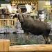 Stuffed Moose by hjbenson