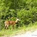 Oh Deer! by sunnygreenwood