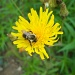 THE BEES ARE BUSY by bruni