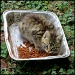 Cat Casserole? by cjwhite