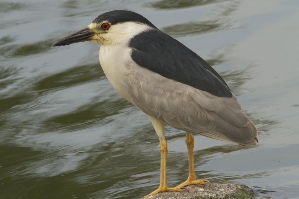 Waiting Bird by robv