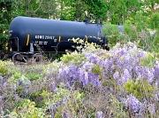 8th Apr 2010 - Train and Wisteria