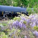 Train and Wisteria by stownsend
