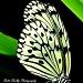 Butterfly by vernabeth