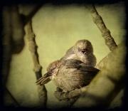 13th Jun 2011 - Angry Bird