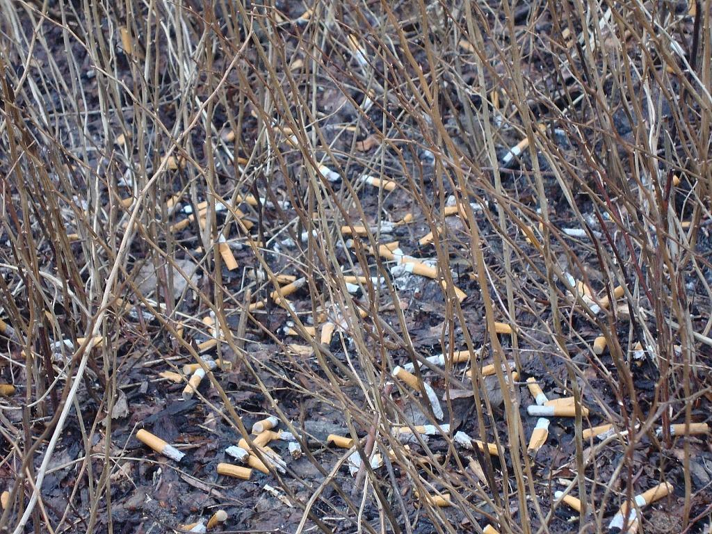 365-DSC01610 Cigarette stubs by annelis