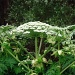 Dangerous plant by gijsje