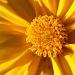 Finally Sunshine by lauriehiggins
