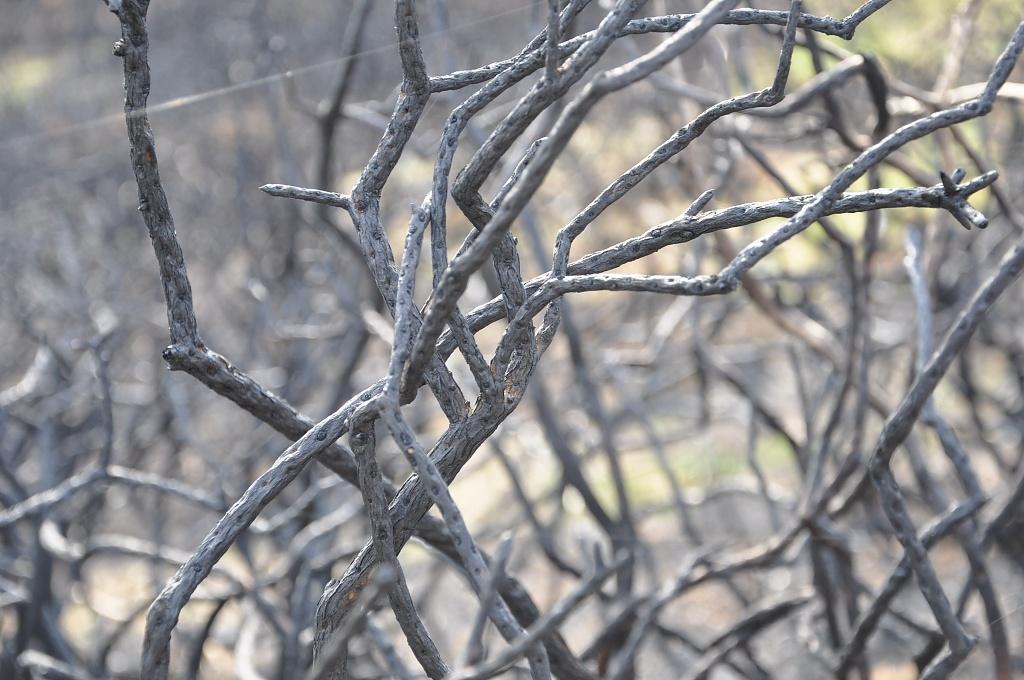 Burnt gorse by overalvandaan