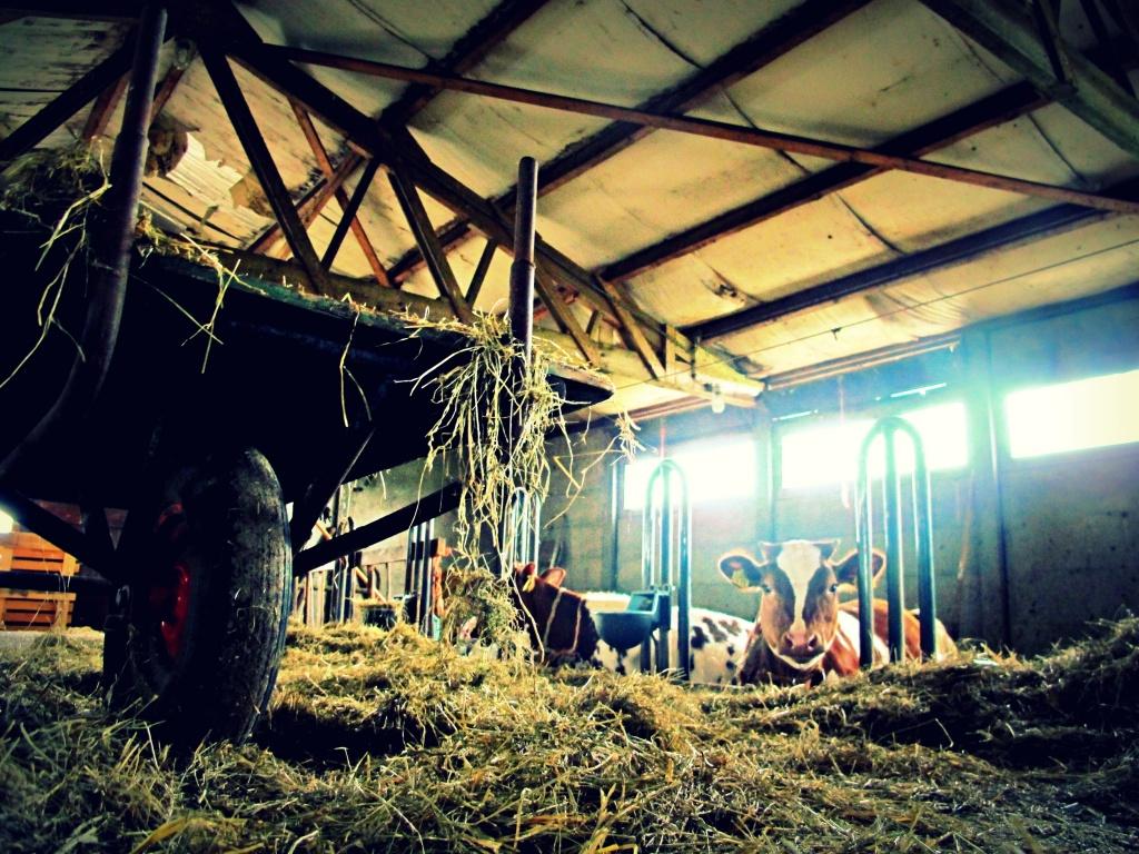 Farm life by halkia