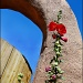 hollyhocks and arch by aikimomm