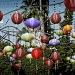 Chinese lanterns  by orangecrush