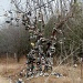 shoe tree by bruni