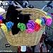 Bike Dog by flygirl