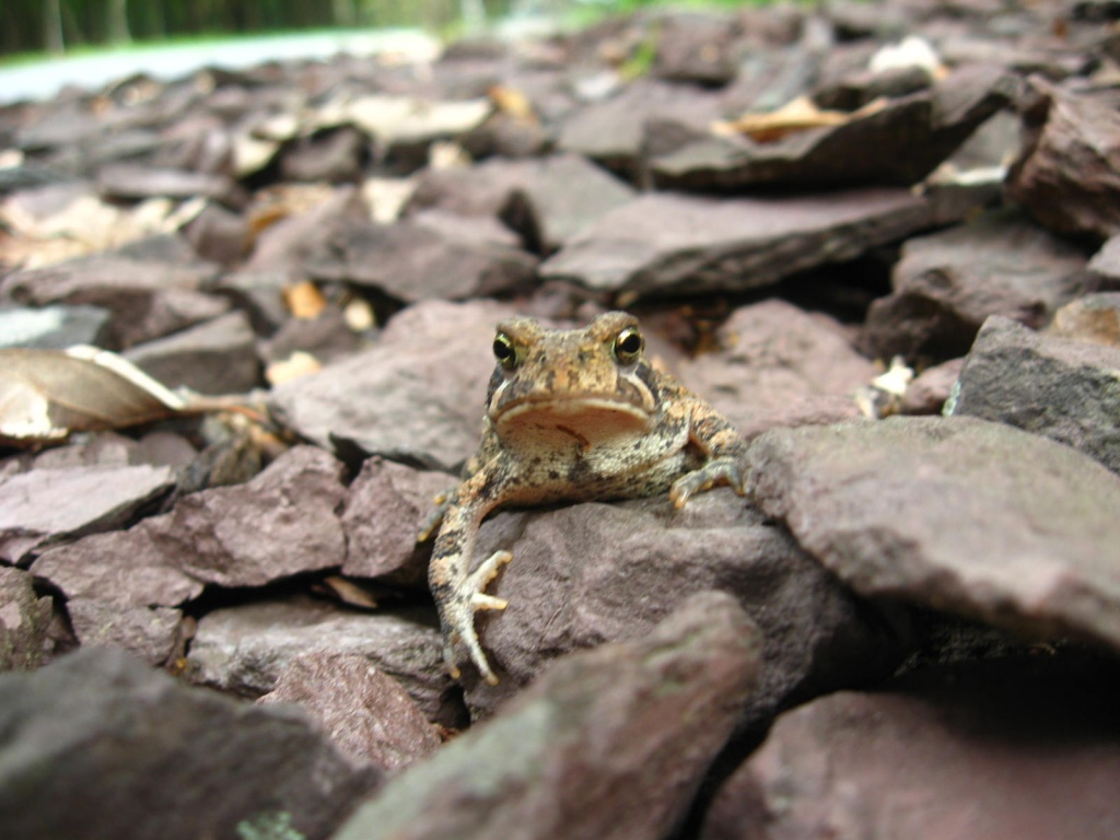 Hello Mr. Toad by olivetreeann