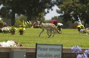14th Jun 2011 - Memorial Coyote