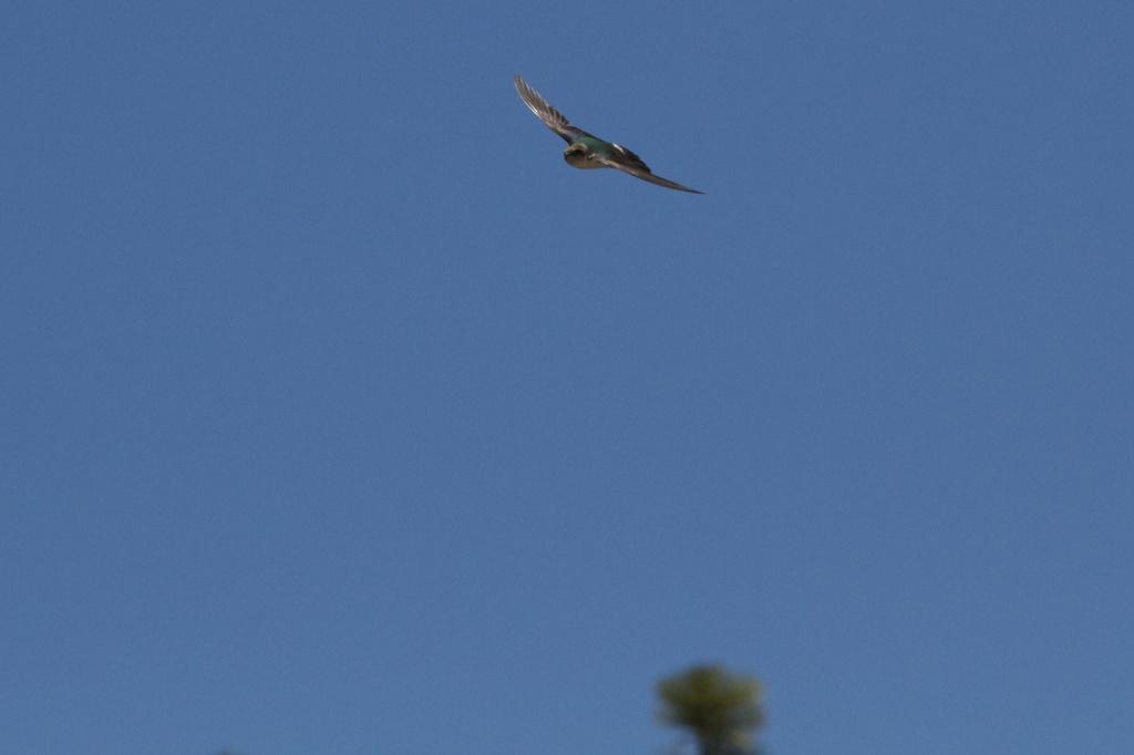 Fighter Flight by robv