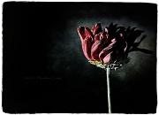 27th Jun 2011 - Um, Flower....