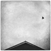 28th Jun 2011 - Birdhouse