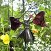 Garden Fairies Live Here by sunnygreenwood