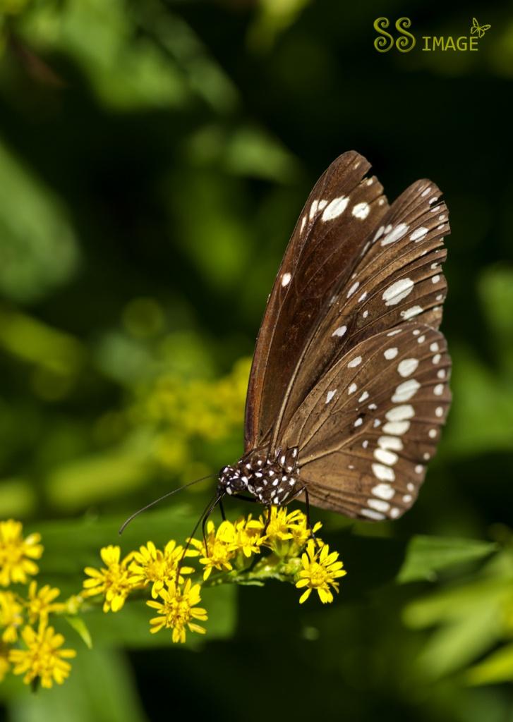 Float like a butterfly by bella_ss