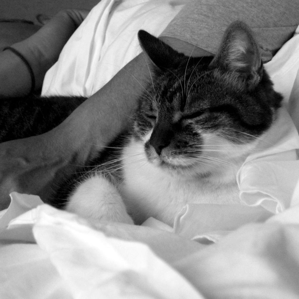Cuddle nap by parisouailleurs