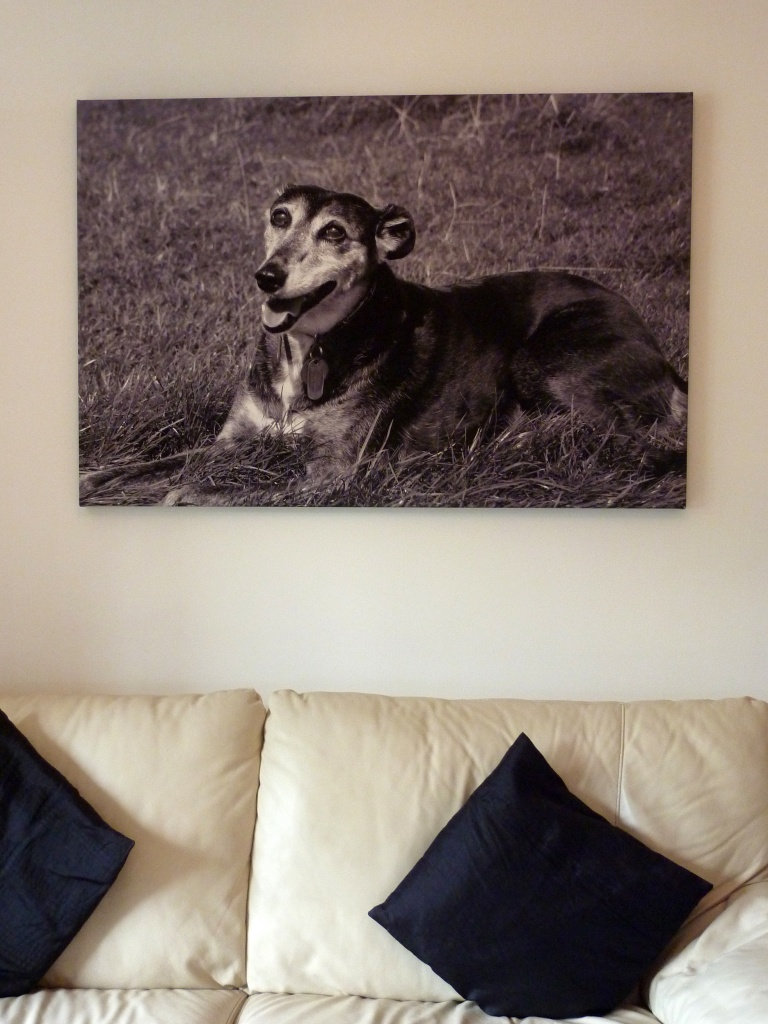 The canvas on my wall ...another whippet by phil_howcroft