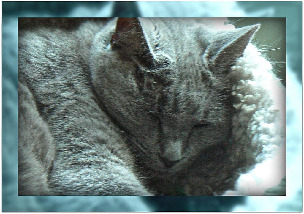 cat nap by reba