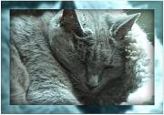 8th Jul 2011 - cat nap