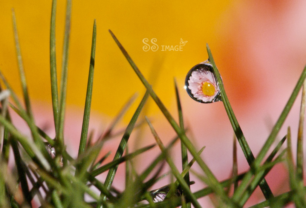Refraction by bella_ss
